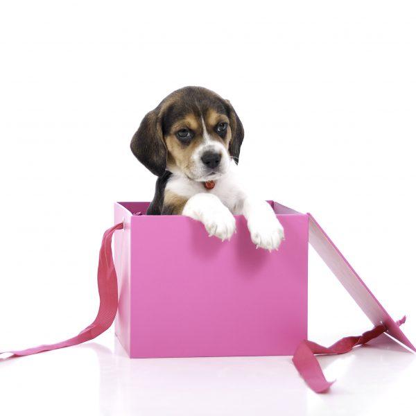 Great employee rewards must be a gift not a burden